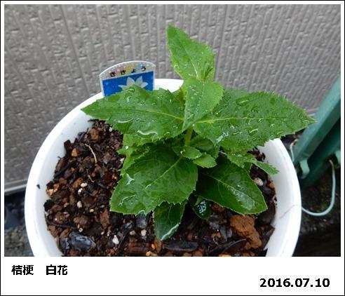 e0033229_1871181.jpg