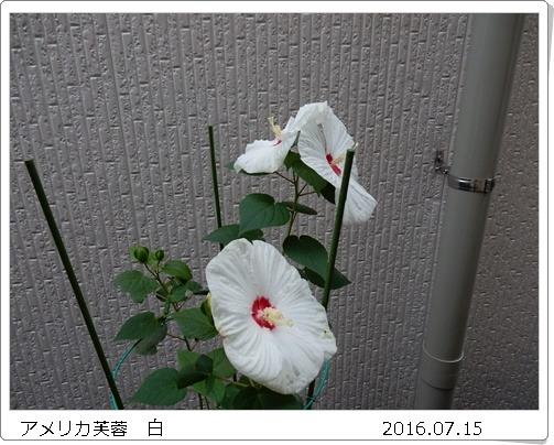 e0033229_17354873.jpg