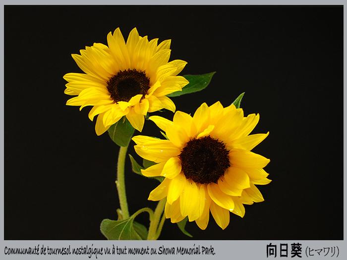c0009981_20023376.jpg