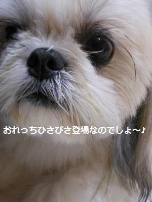 c0261346_13550777.jpg