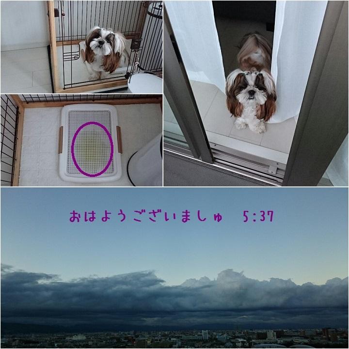 c0363378_15421935.jpg