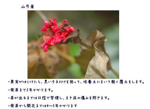 c0051105_15122247.jpg