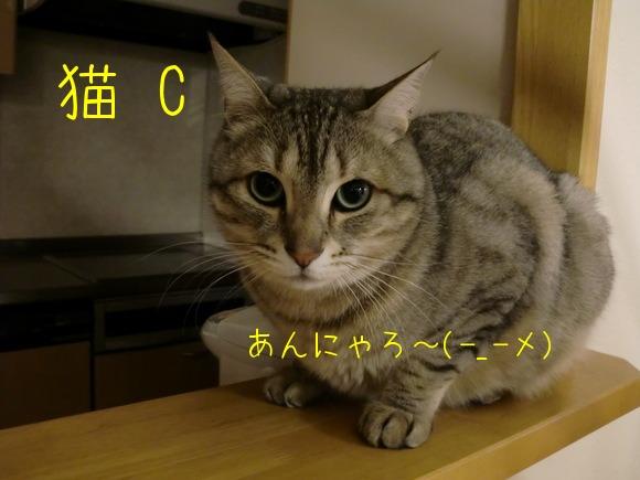 c0259945_13152615.jpg