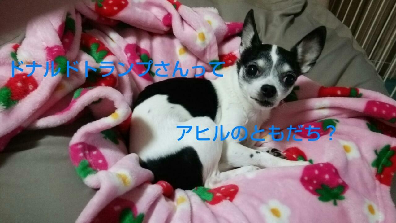 c0109891_20080856.jpg