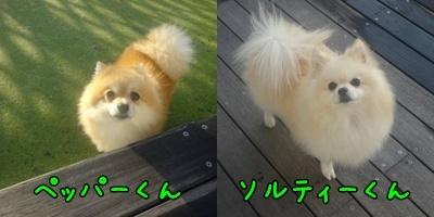 a0338800_20114746.jpg