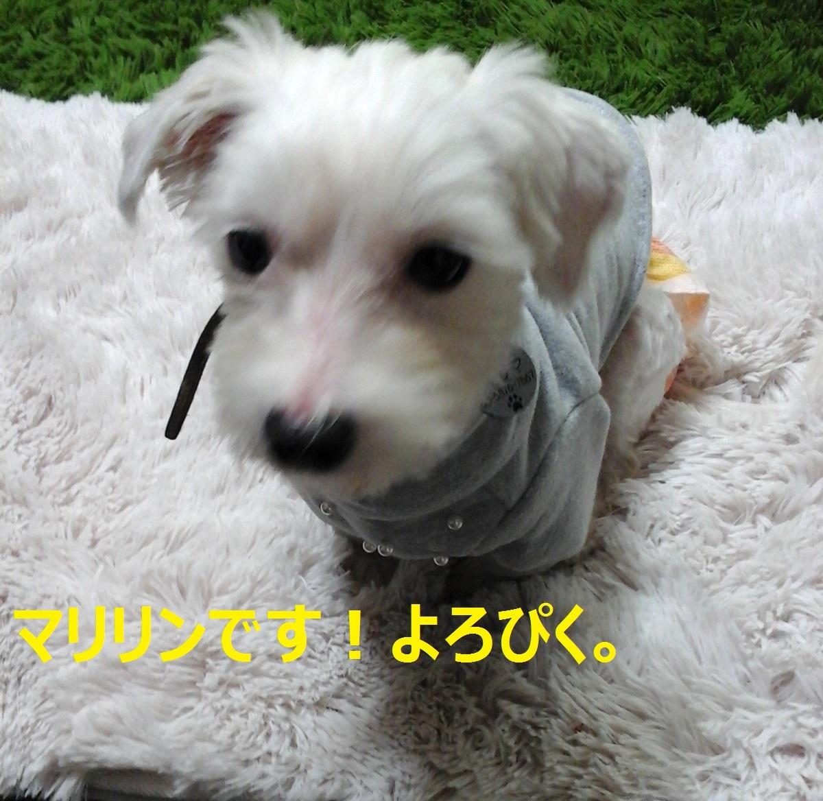 a0012531_14272720.jpg