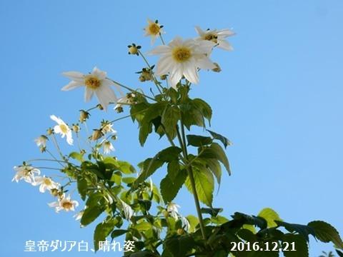 e0033229_15101465.jpg
