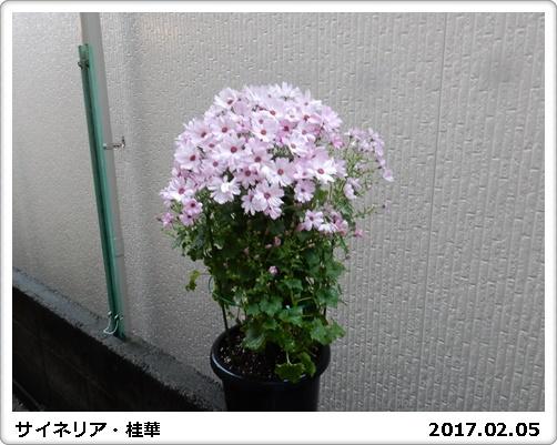 e0033229_1823284.jpg