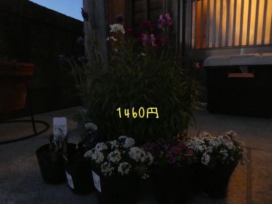 e0234881_207141.jpg
