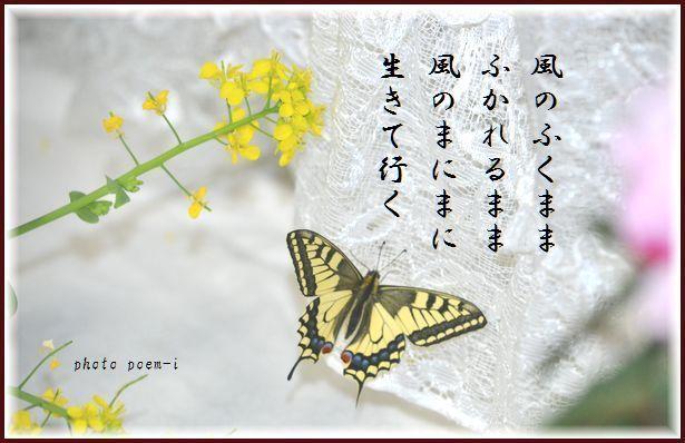 e0363836_08225859.jpg