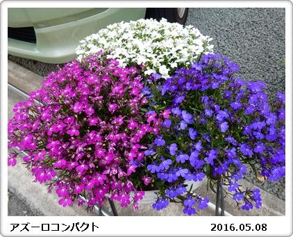 e0033229_18362264.jpg
