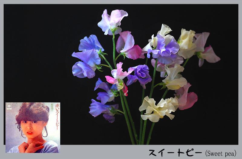 c0009981_04540441.jpg