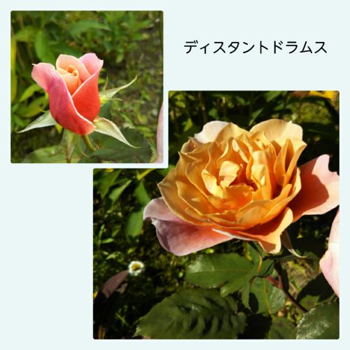 a0143388_16305734.jpg