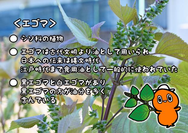 c0259934_14343120.jpg