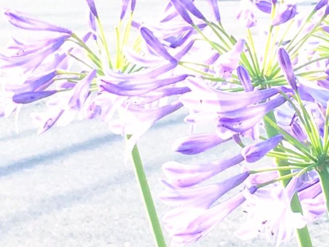 c0334835_23362014.jpg