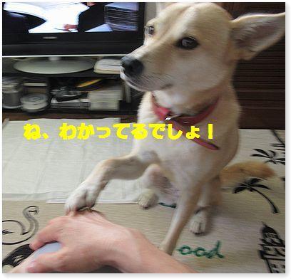 c0006757_22212779.jpg