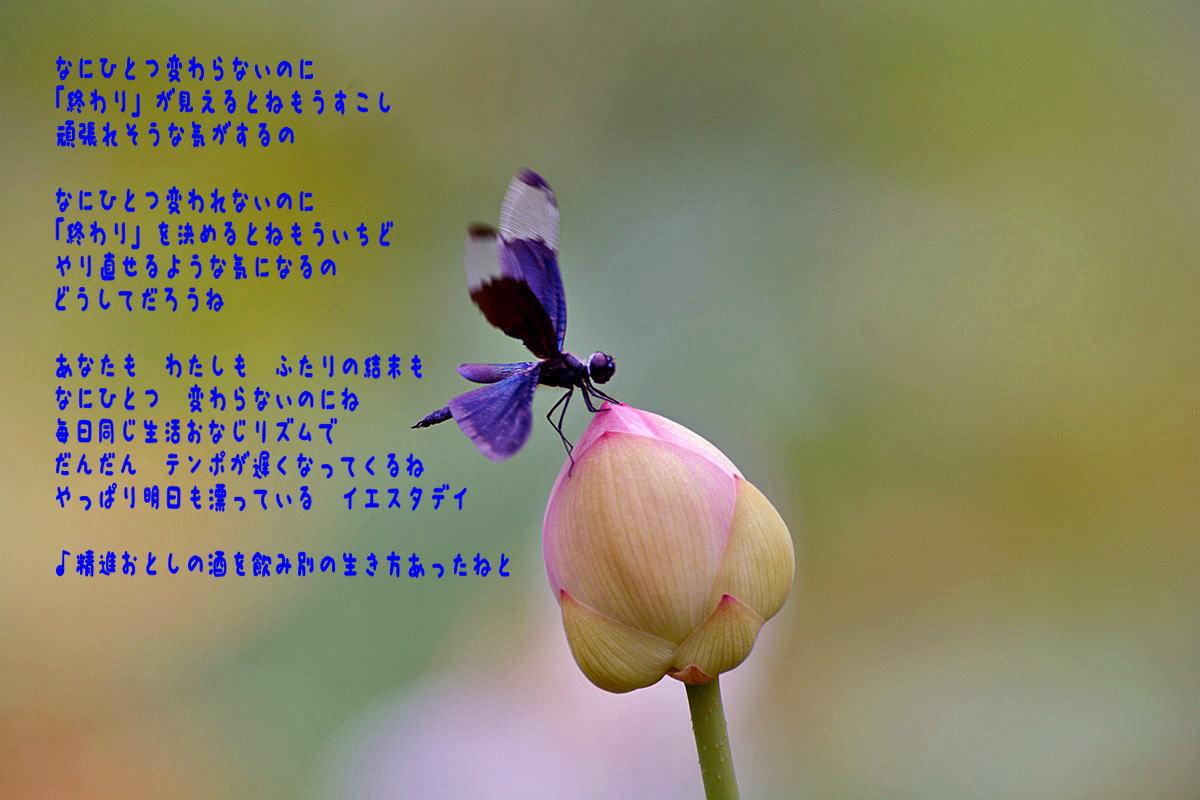 e0360589_21473170.jpg