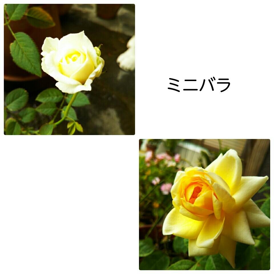 a0143388_10173737.jpg
