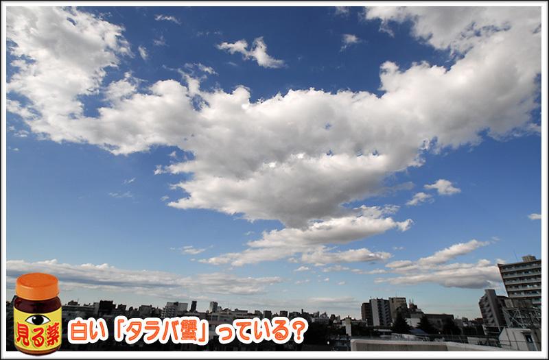 c0009981_16060663.jpg