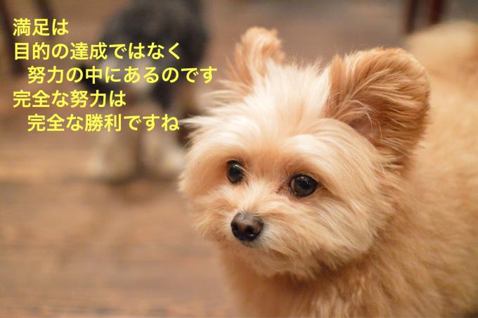 a0059277_10420390.jpg