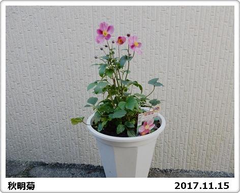 e0033229_18193591.jpg
