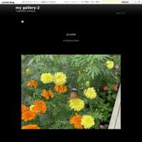 '16 Indexes インデックス - my gallery-2