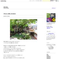 真珠湾 - mili's diary