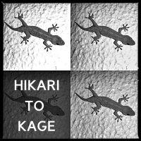 ヒカリトカゲ(モノクロ写真)