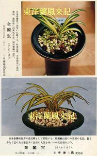 「金閣宝」の昔の画像                    No.177 - 東洋蘭風来記奥部屋