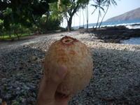 海でアフリカの人に会いました - Hawaiian LomiLomi  ハワイのおうち 華(レフア)邸
