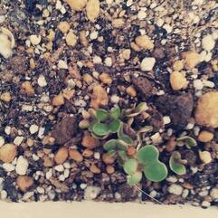 ちいさな芽。 - てくてく・・な日々