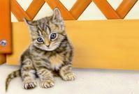 6月のデスクトップピクチャ(壁紙) - junya.blog(猫×犬)リアリズム絵画