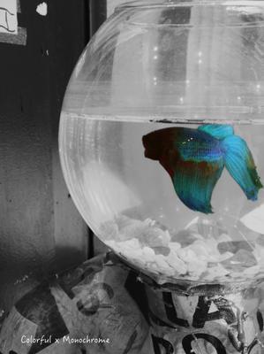 Fishbowl head - Colorful × Monochrome
