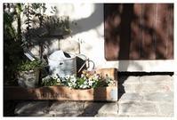 オープンガーデン営業日&お休みのお知らせ - natu     * 素敵なナチュラルガーデンから~*     福岡でガーデンデザイン、庭造り、外構工事をしてます