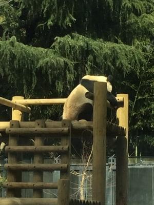 【続】上野動物園に行ってみた。親バカ日記の巻 - ラクチン100均ネイル生活!