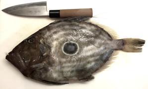 的鯛とスズキと槍烏賊 - 家庭で出来る 魚のさばき方&食べ方