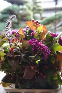 11月レッスン案内 - Groseille グロゼイユ~四季のお庭とぼちぼちお花活動~