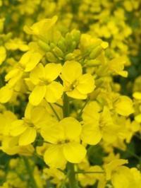 3月から5月までの祝祭日 - Blue Lotus