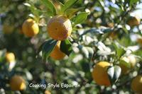 こだわりの国産柑橘ピールづくり募集はじまります。 - 自家製天然酵母パン教室Espoir3n(エスポワールサンエヌ)料理教室 お菓子教室 さいたま