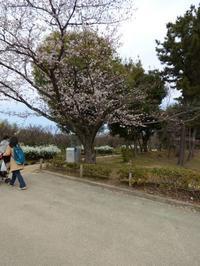 春爛漫 万博記念公園ノルディック・ウォーク体験イベントのお知らせ - 大阪北摂のノルディック・ウォーク!TERVE北大阪のブログ