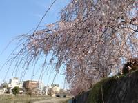 今熊野の春たより - MOTTAINAIクラフトあまた 京都たより