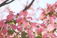 手の届かない君 ☆花水木 - 夢・ファンダンゴ