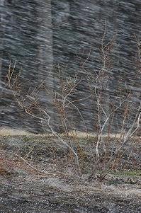 4月、吹雪の日。 - 空ヤ畑ノコトバカリ
