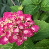 梅雨のむくみ対策に - aloha healing Makanoe
