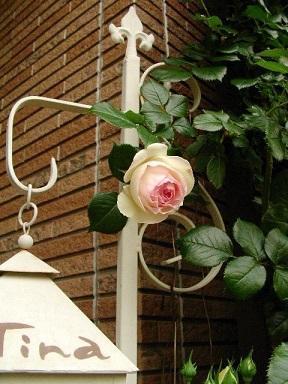 TOP - mr&mrs kajiの小さなバラの庭