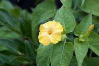 黄色い花 - FUJIFILM Xシリーズで撮るフォトブログ