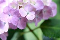 雨の季節でも写真でhappyに!気分が上がる6月のすてきショットの楽しみ方! - 暮らしノート