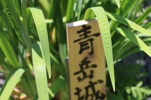 水と緑と花の長井長井あやめ公園・・・5 - 米沢より愛をこめて・・