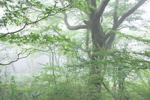 霧流れる森 - Gallery    四季の風