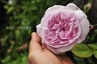 天上の薔薇 - 彼とカヲリの庭の関係